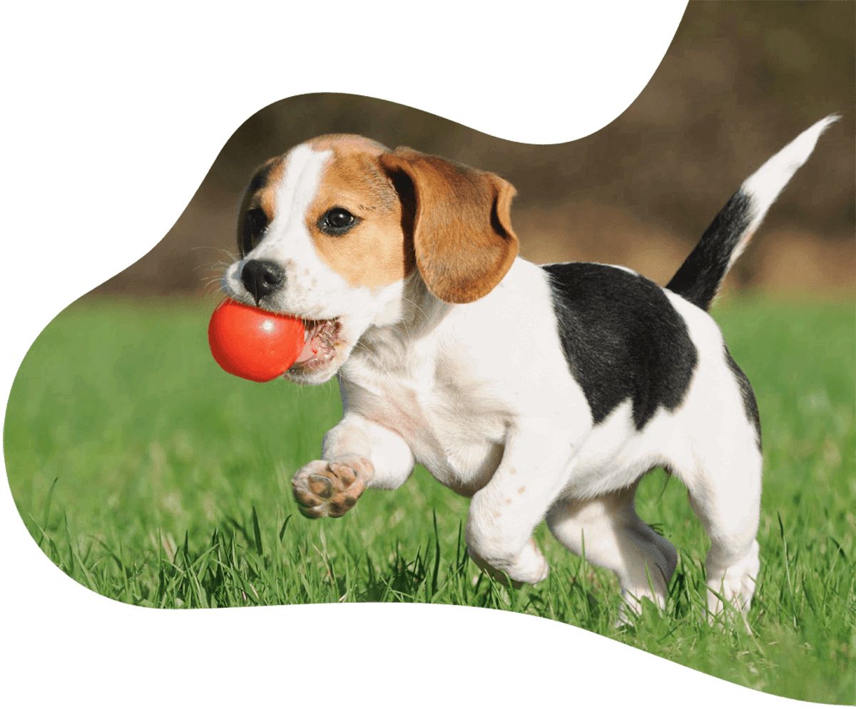 https://poopscoopguys.com/wp-content/uploads/dog-on-grass-with-ball.png